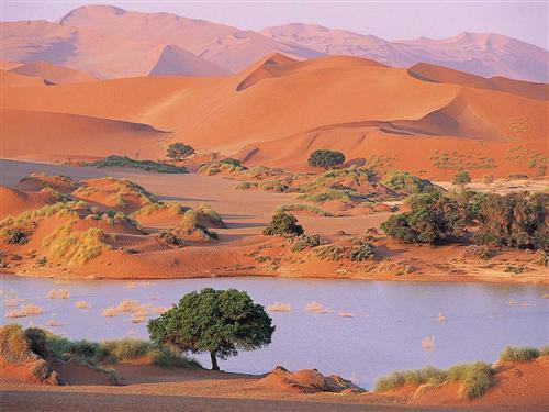 oasis-desert-sahara-algerie